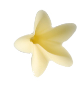 Signature decorations (Jura) - Ivory Flower
